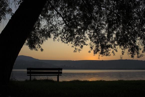 Strom a lavička na brehu priehrady pri východe slnka